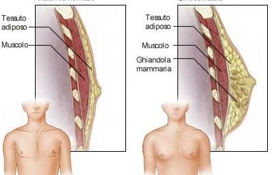 Interventi di Ginecomastia
